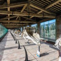Discover Italy: La Certosa di Pisa e il Museo di Calci